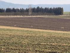Únor 2020 jarní zastavení ve Svaťáku.